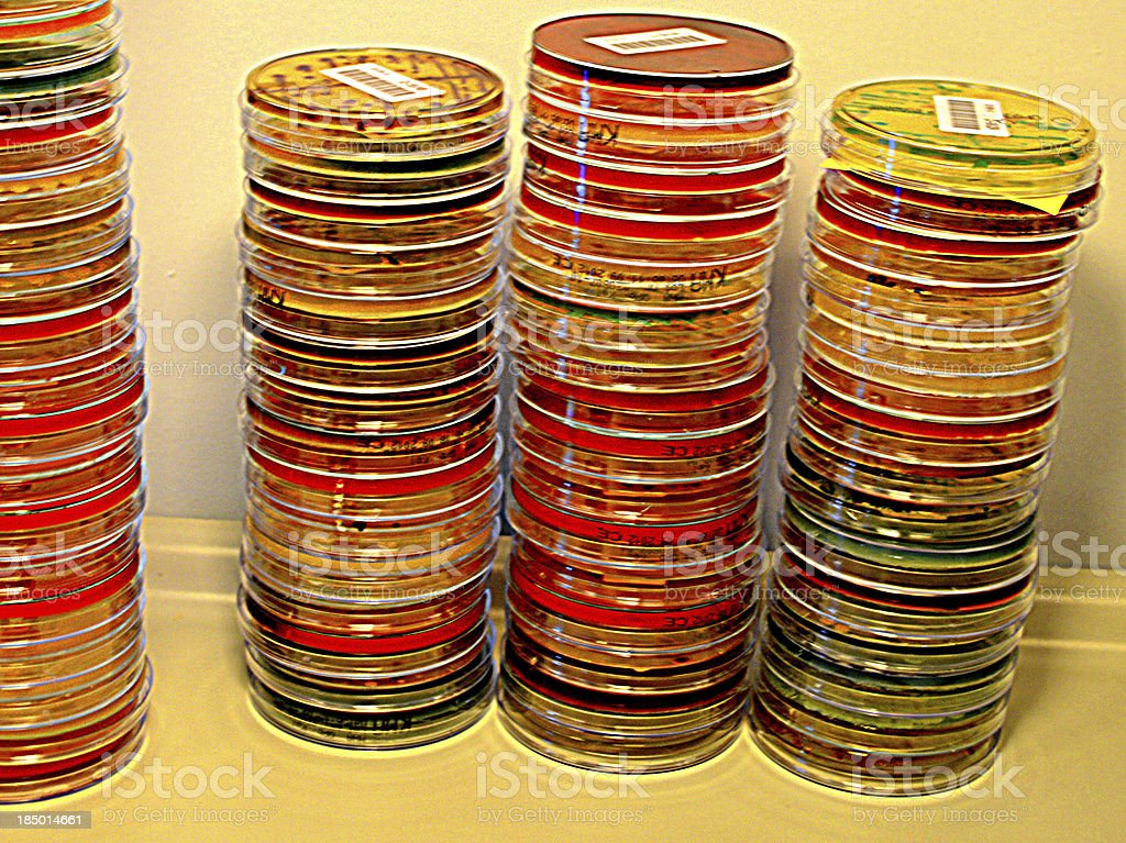 Stacks of bacterial culture plates in an anaerobic incubation chamber royalty-free stock photo