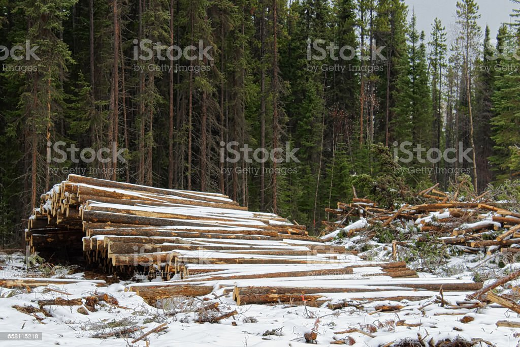 Stacks of cut timber ready to be hauled out of a logging area stock photo