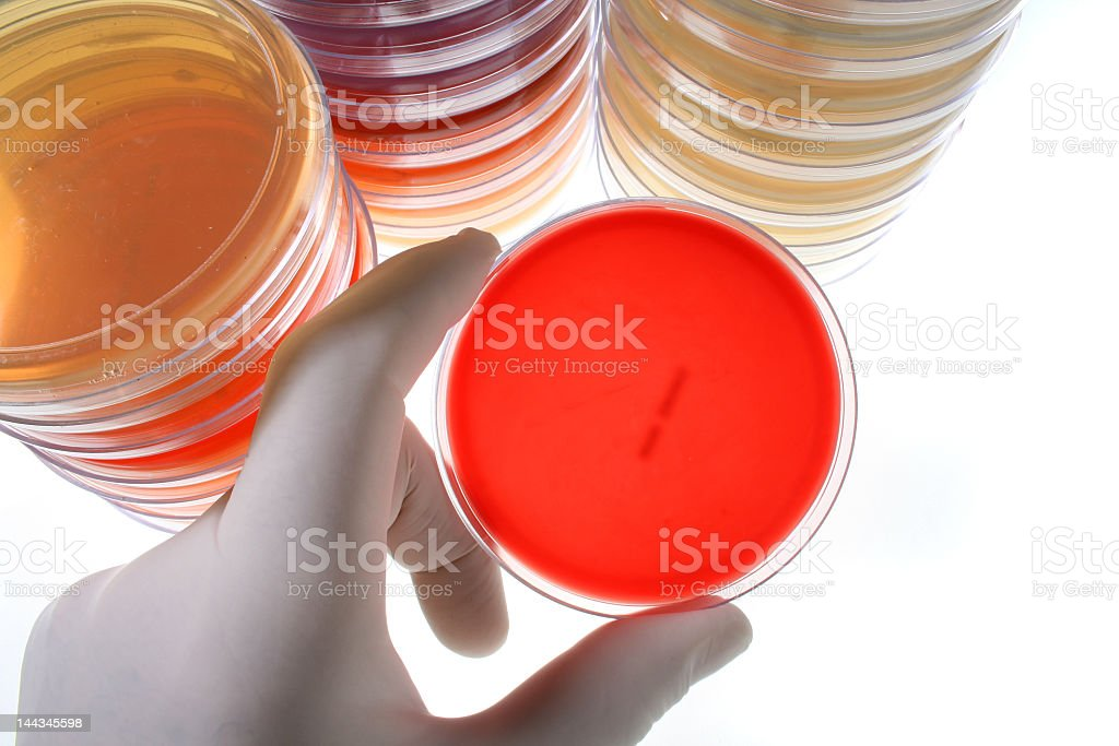 Stacks of Petri dishes and a hand holding one royalty-free stock photo