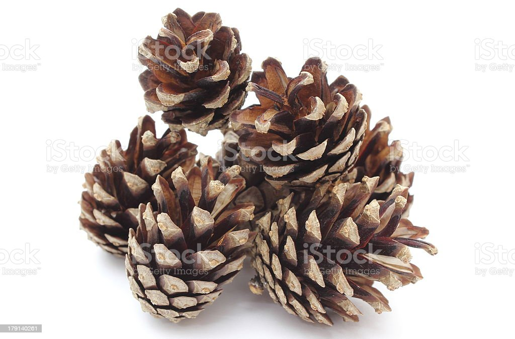 Stacks of pine cones on white background royalty-free stock photo