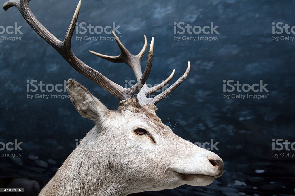 stag 4 stock photo