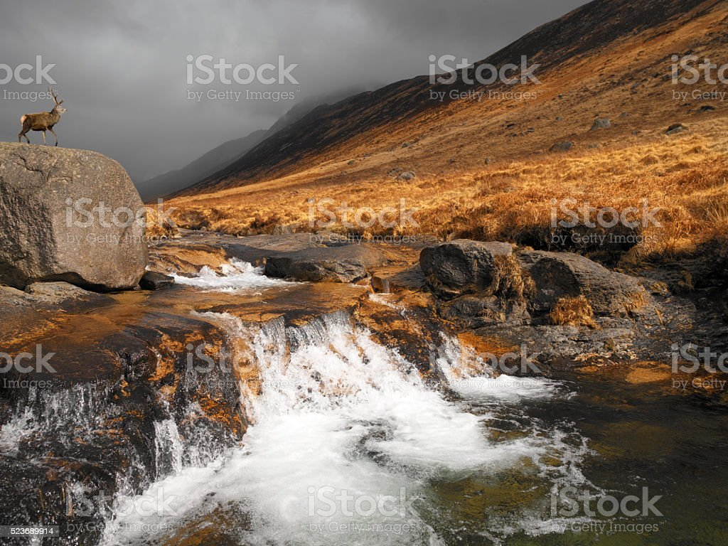 Stag in Glen Rosa - Isle of Arran - Scotland stock photo