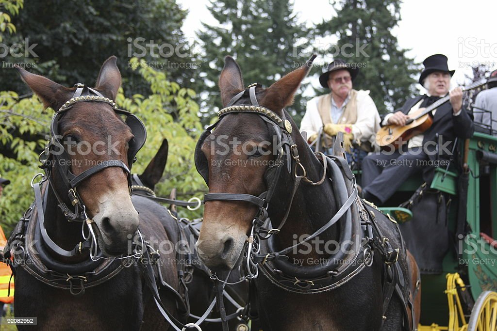 Stagecoach-Blast from the Past stock photo