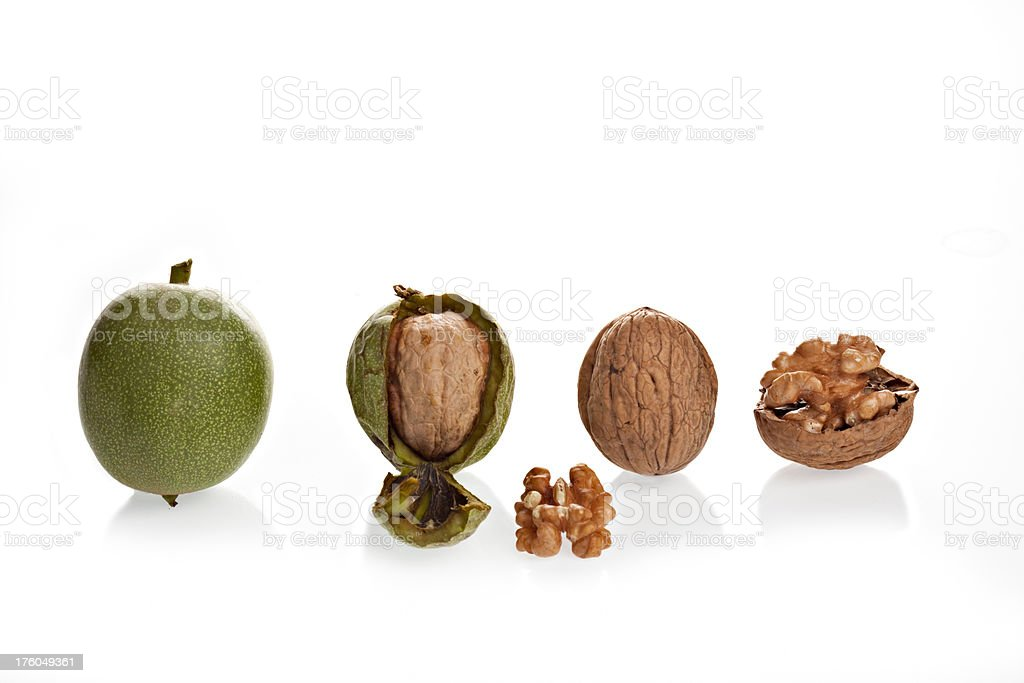 Stages Of A Walnut royalty-free stock photo