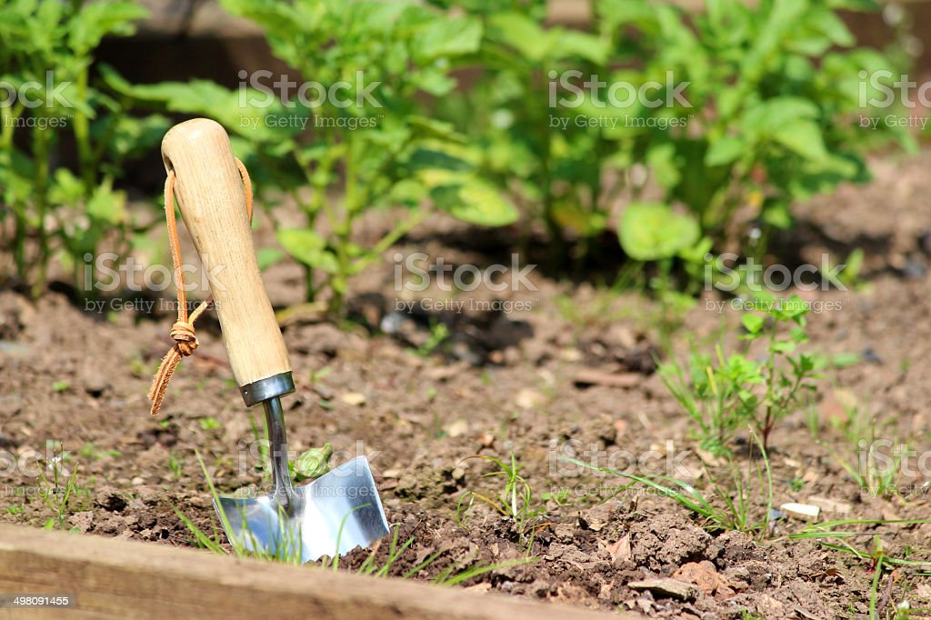 Stainless steel hand trowel in vegetable garden, wooden handle, image royalty-free stock photo