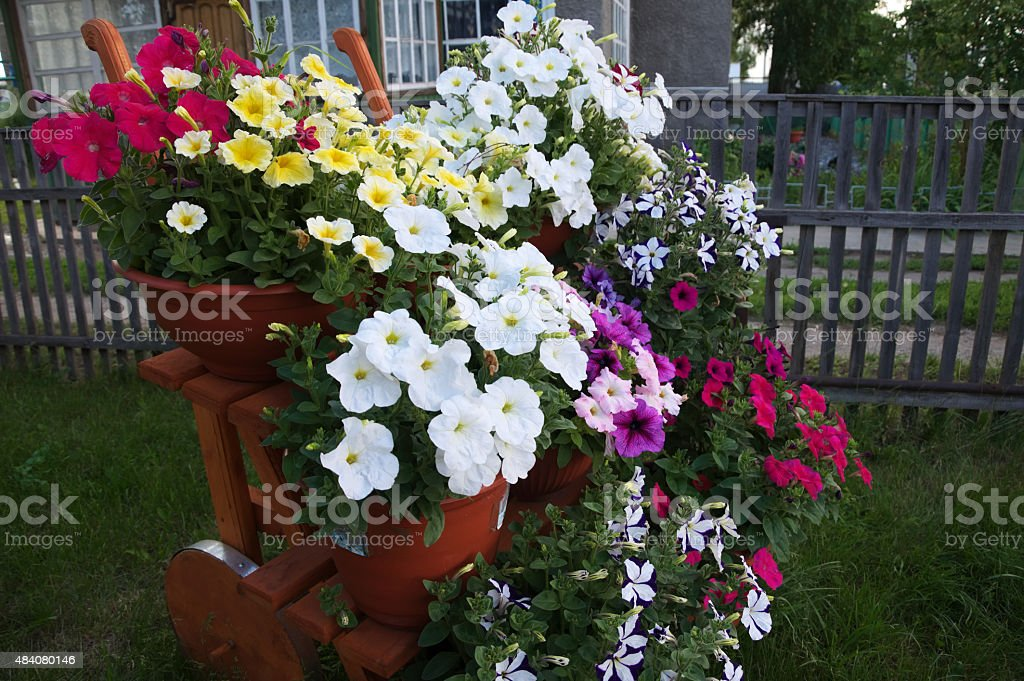stair decoration flower garden stock photo
