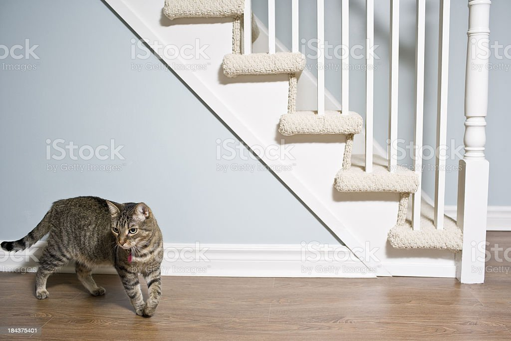 Staircase and Hardwood Floor royalty-free stock photo