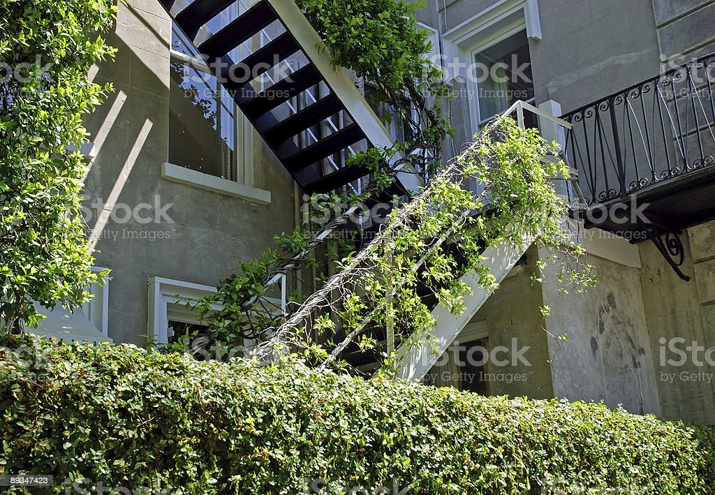 Staircase Covered in Carolina Jasmine royalty-free stock photo