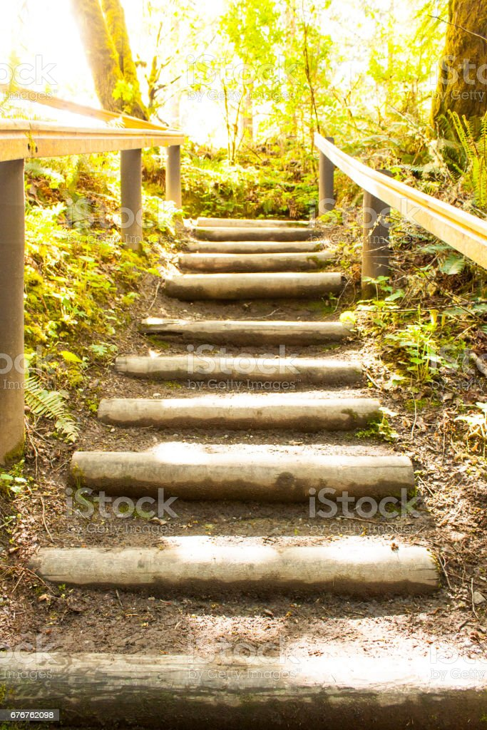 Staircase in the Forest stock photo