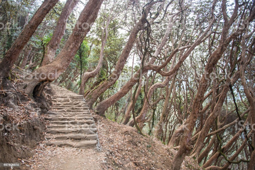staircase up and down on the way to Annapurna base camp stock photo
