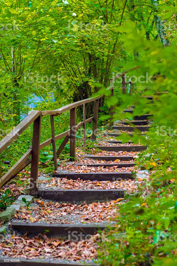 Stairs among the green trees stock photo