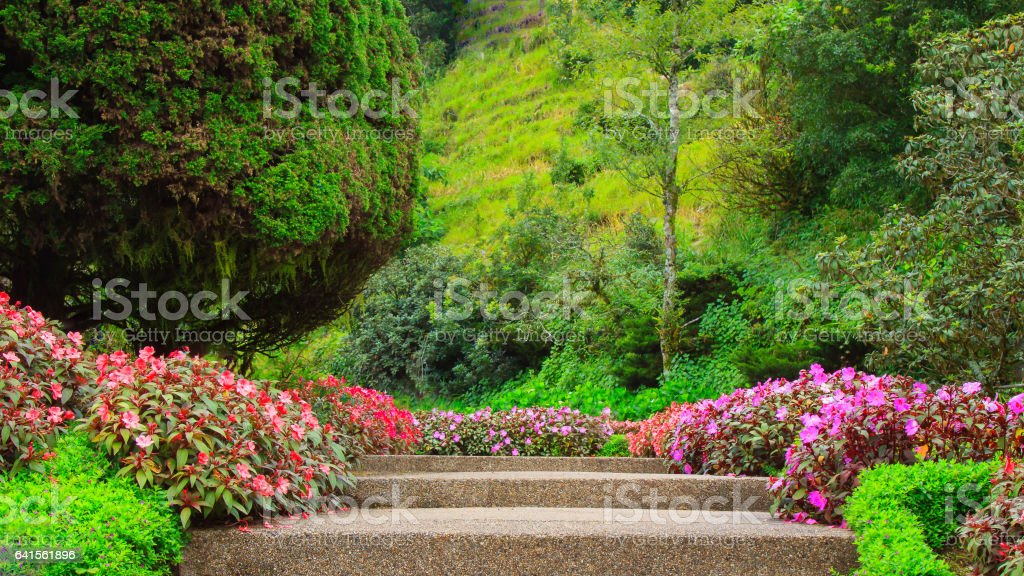 Stairs in a flower garden flower garden stock photo
