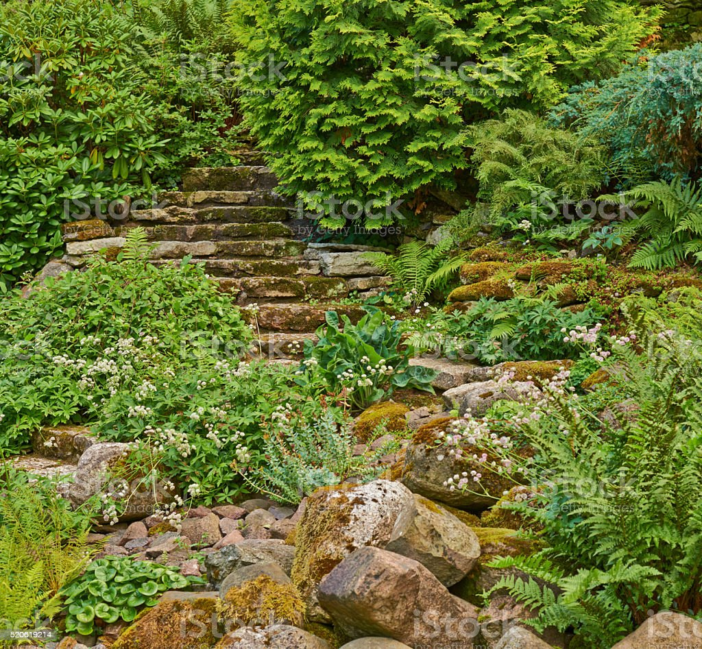Stairs in the green overgrown garden stock photo