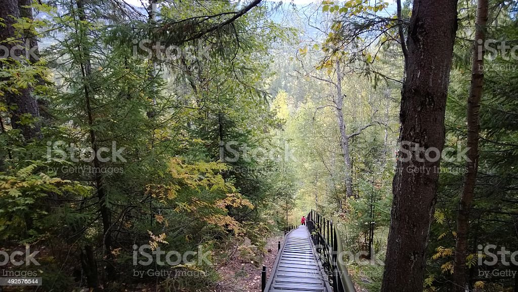 Stairs in the middle of a forest stock photo