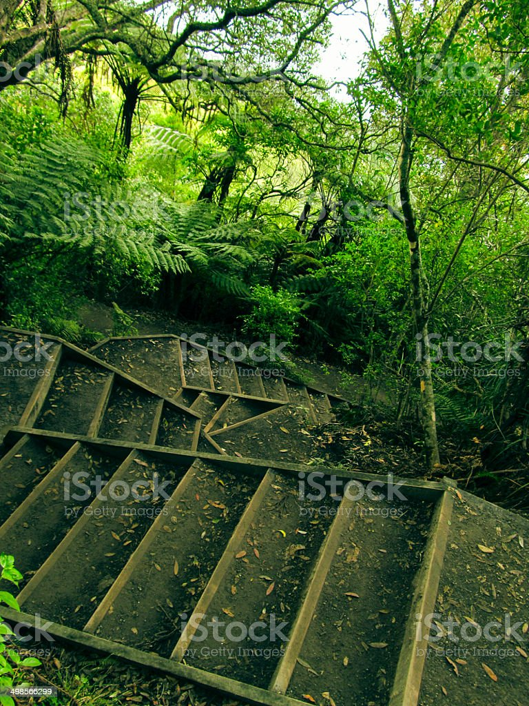 Stairs in the rainforest stock photo