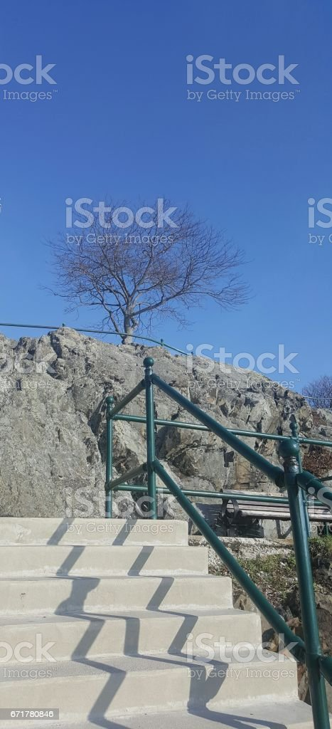 Stairs with a tree stock photo