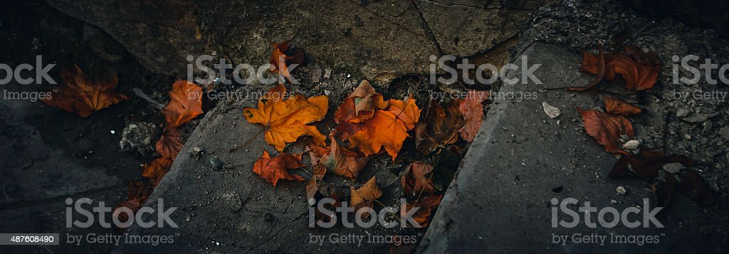 Stairs with leaves royalty-free stock photo