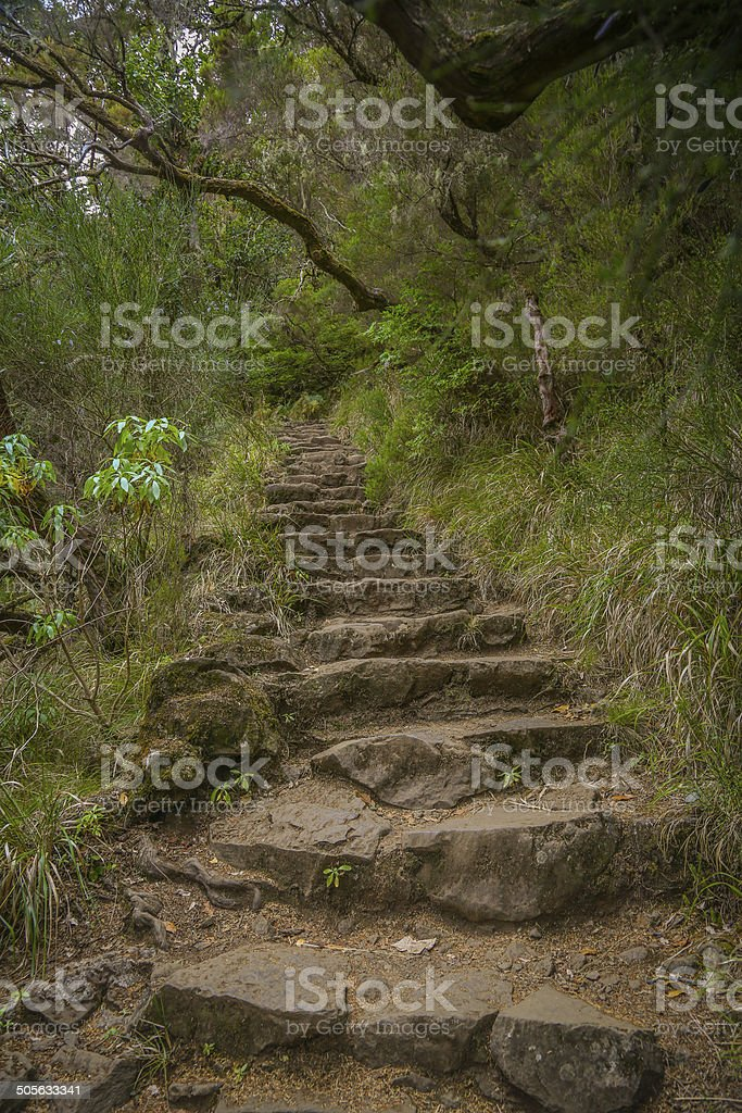 Stairway into the wildness royalty-free stock photo