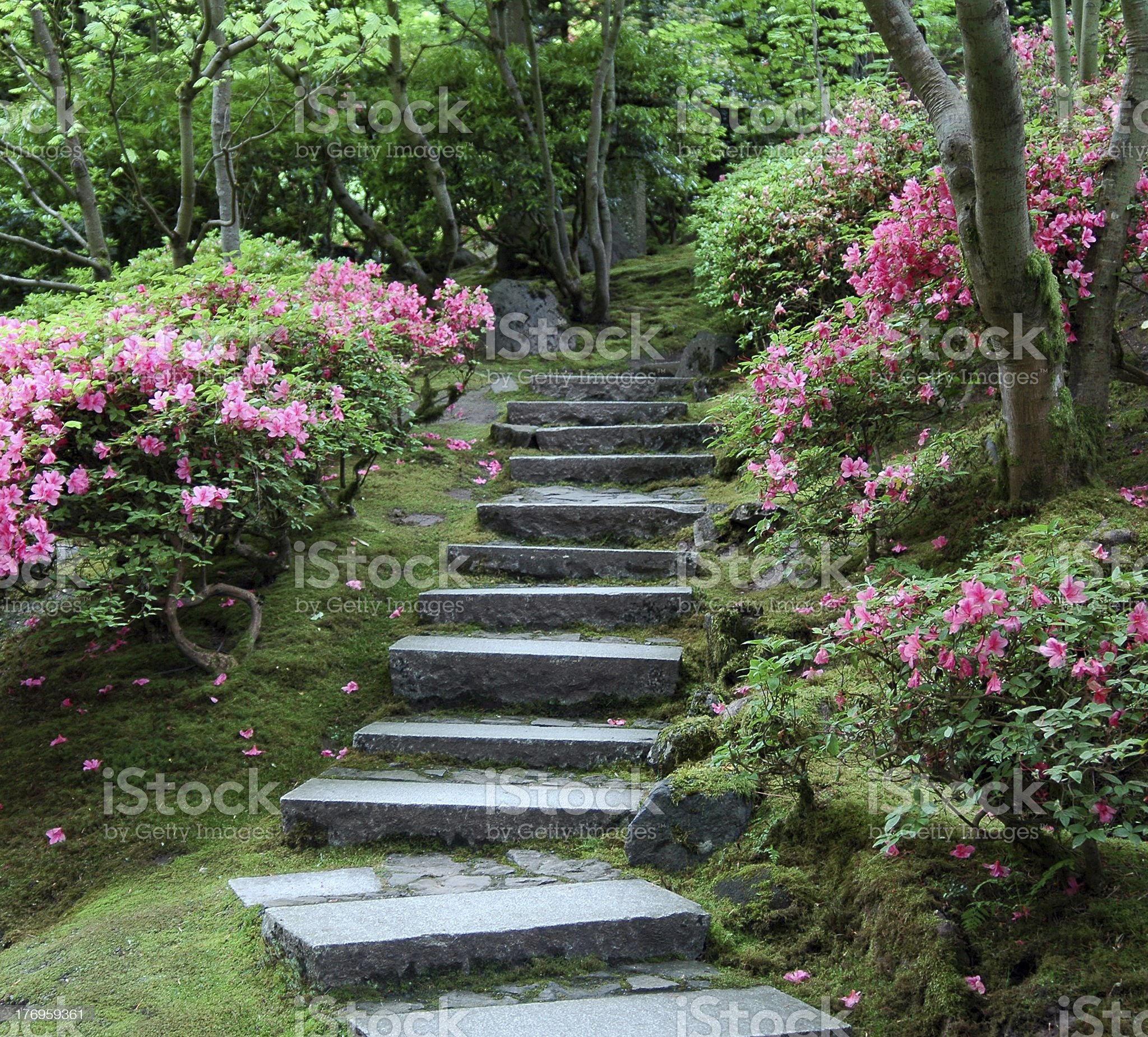 Stairway through a Japanese garden in bloom royalty-free stock photo