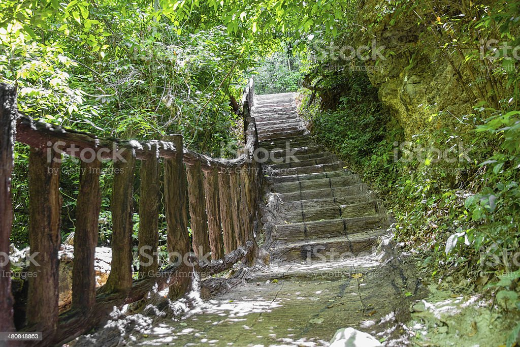 Stairway to forest royalty-free stock photo