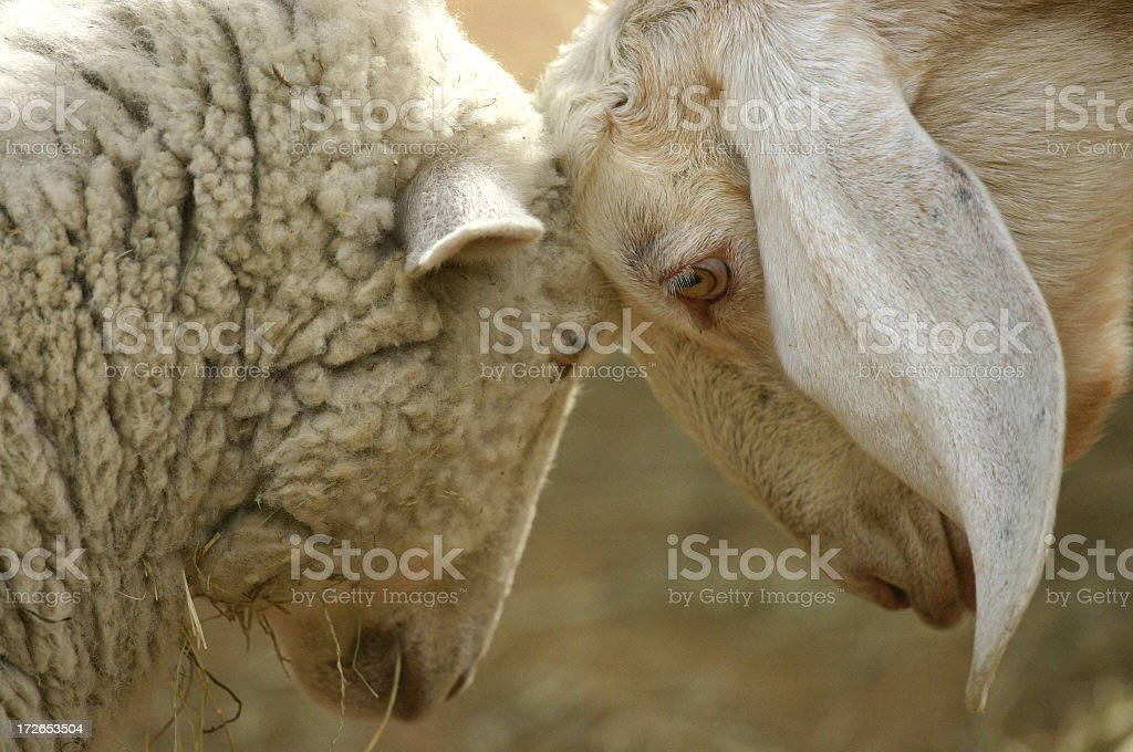 Stalemate stock photo