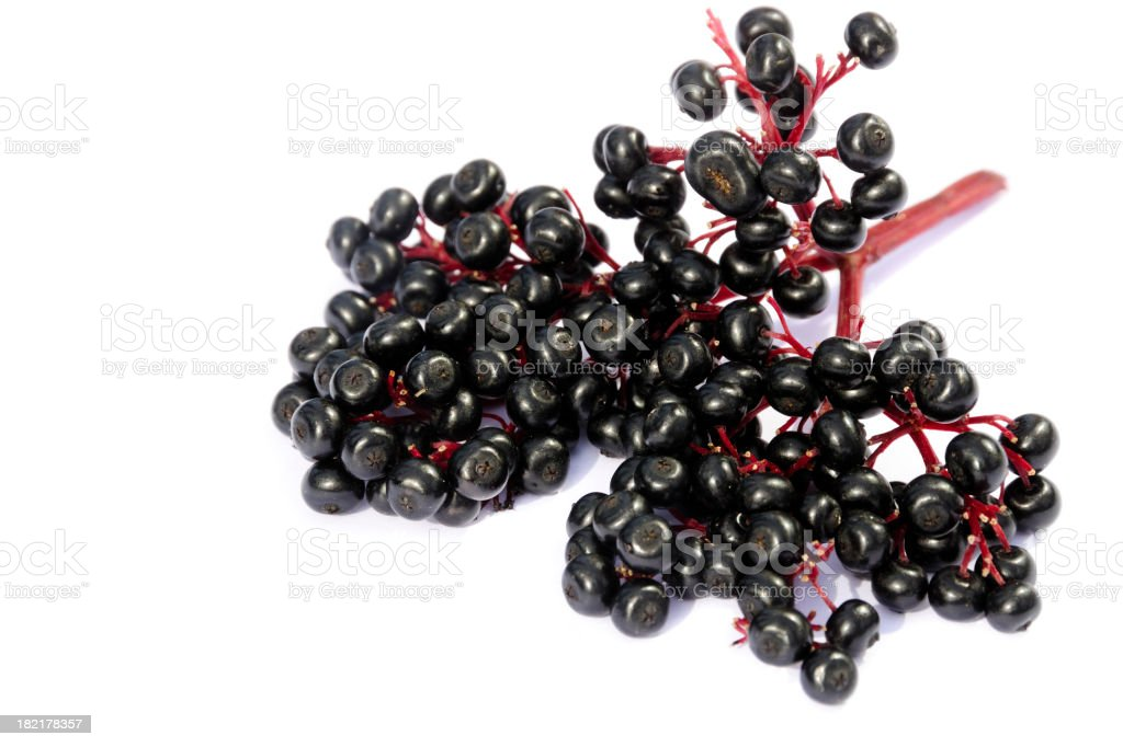 Stalk of elderberries on a white background royalty-free stock photo