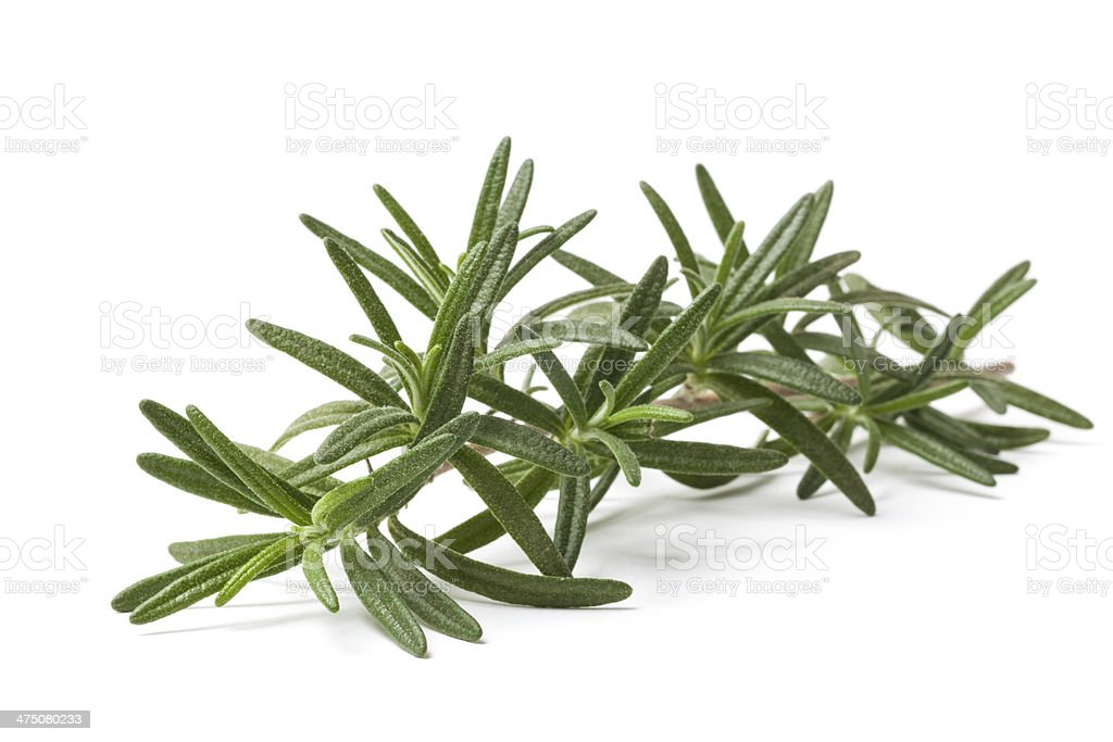 Stalk of Green Rosemary Condiment royalty-free stock photo