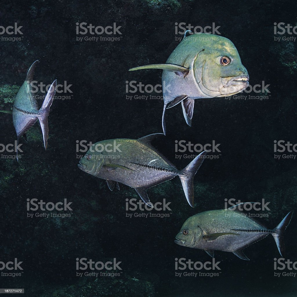 Stalkers royalty-free stock photo