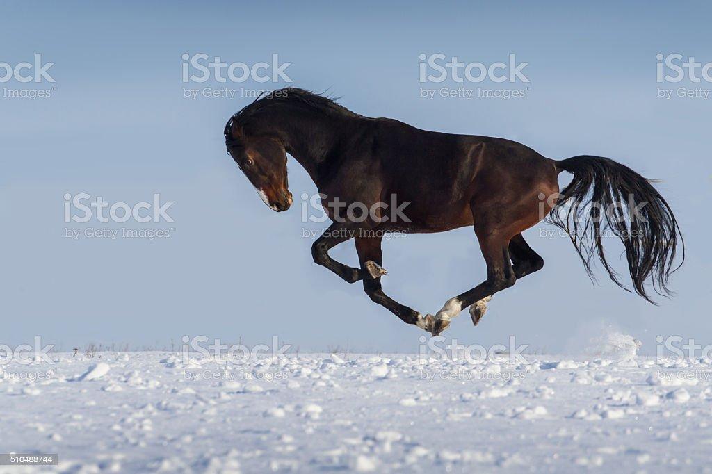 Stallion in winter stock photo