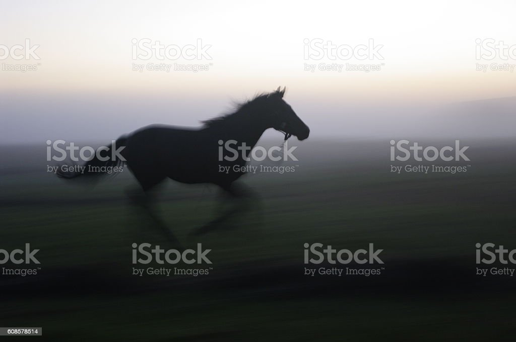 stallion stock photo
