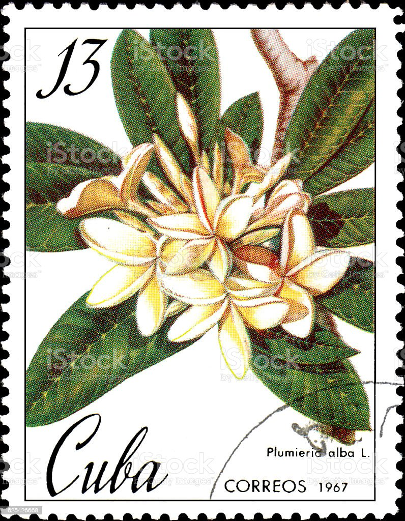 Stamp printed in Cuba shows image of a Plumieria alba stock photo