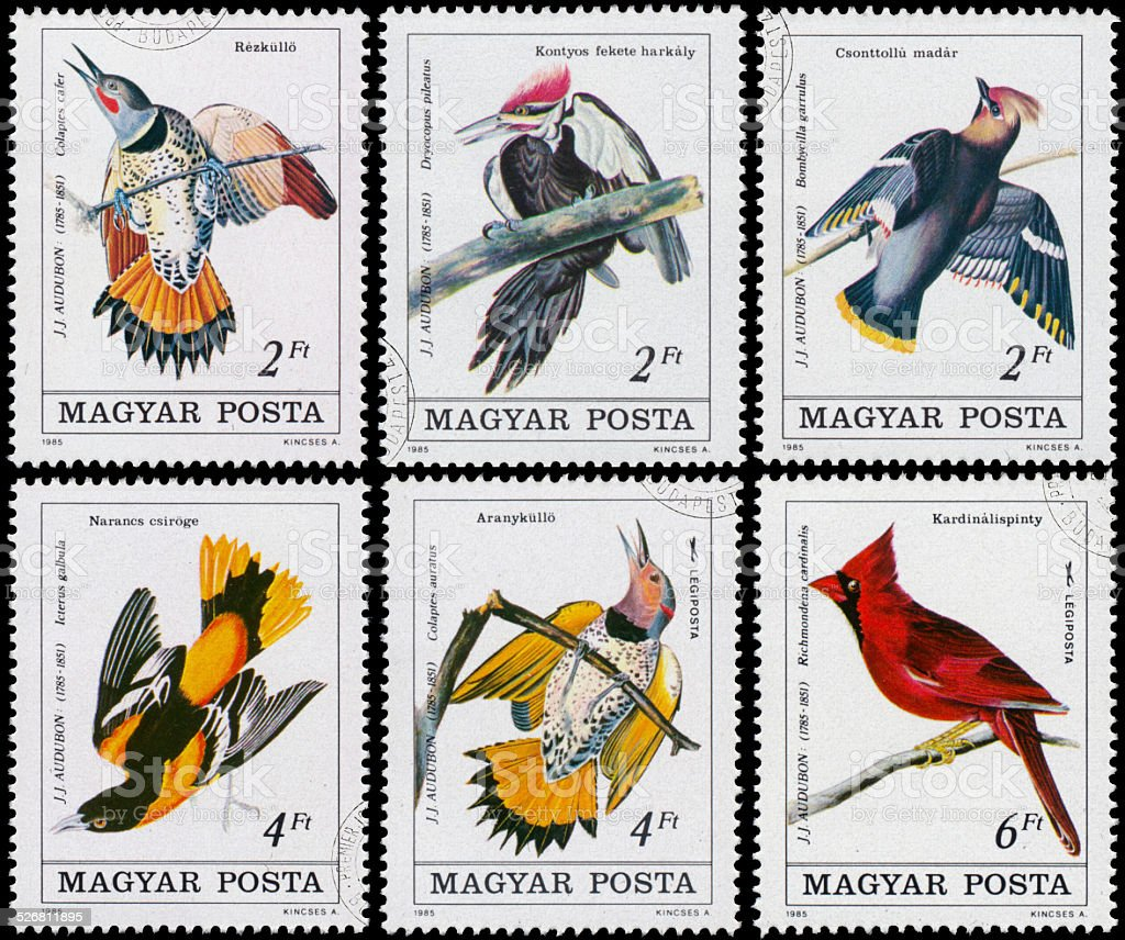 Stamp printed in Hungary shows Common Flicker stock photo