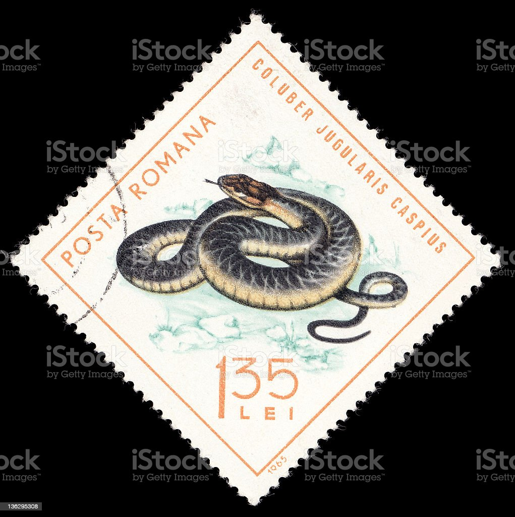 Stamp with coluber stock photo