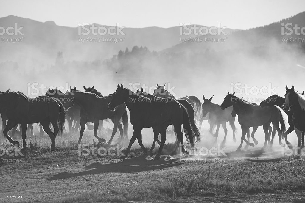 B&W stampede stock photo