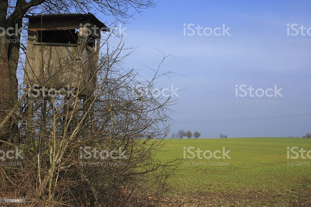stand in spring stock photo