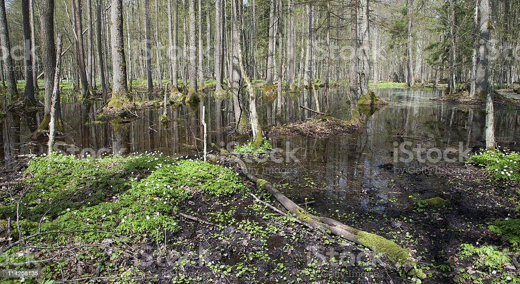 Stand in springtime with water and anemone flowering stock photo