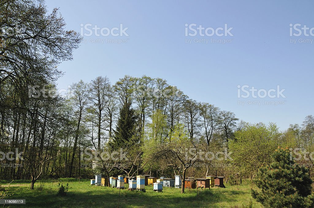 Stand of hives royalty-free stock photo