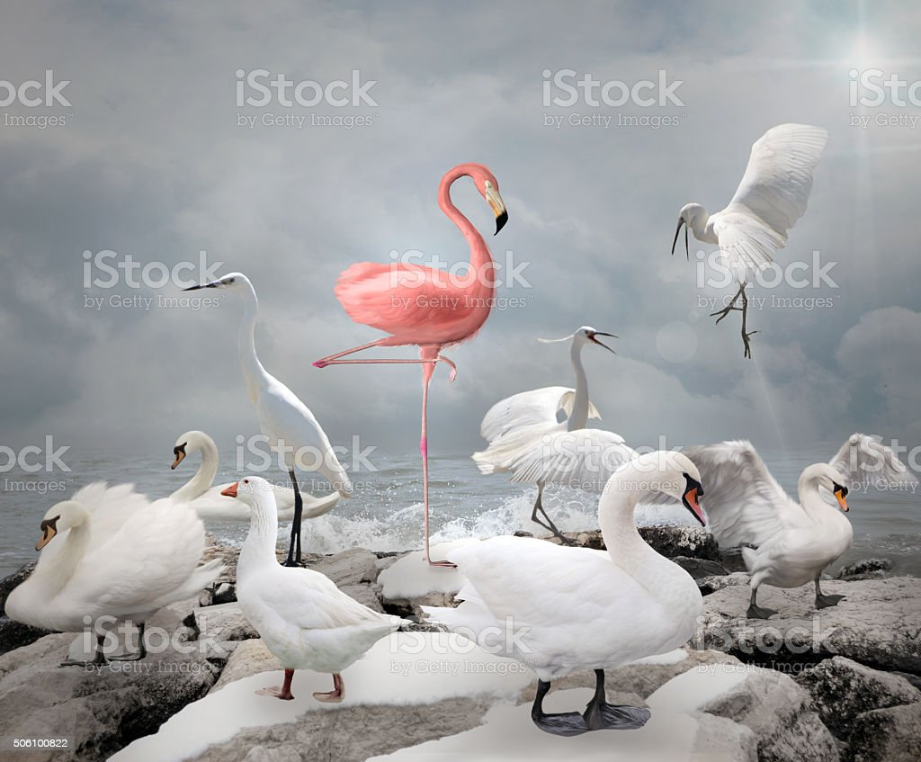 Stand out from a crowd - Flamingo and white birds stock photo