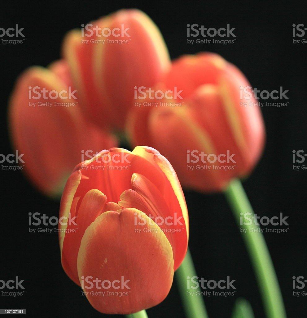 Standalone flower royalty-free stock photo
