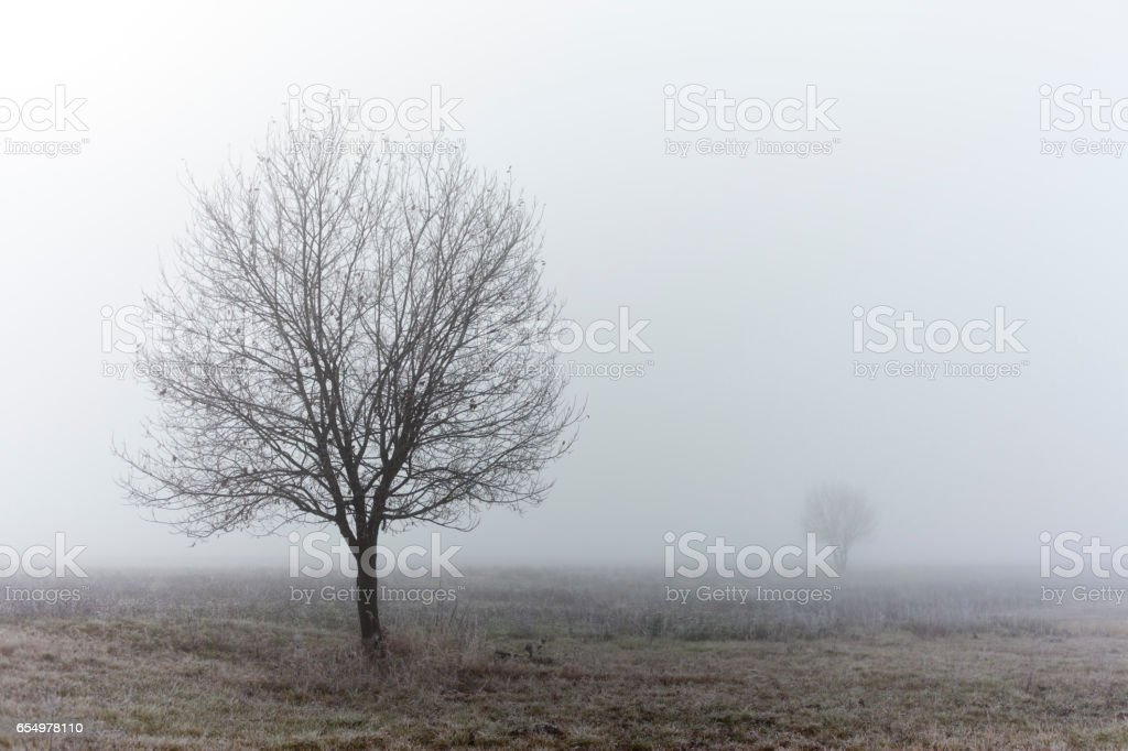 Standalone tree at fall misty morning stock photo