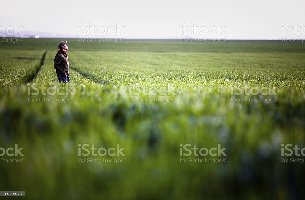 Standing alone in a field royalty-free stock photo