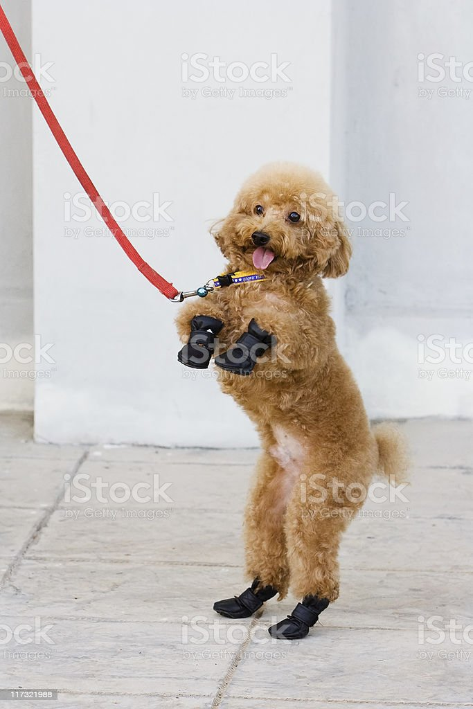 Standing dog royalty-free stock photo
