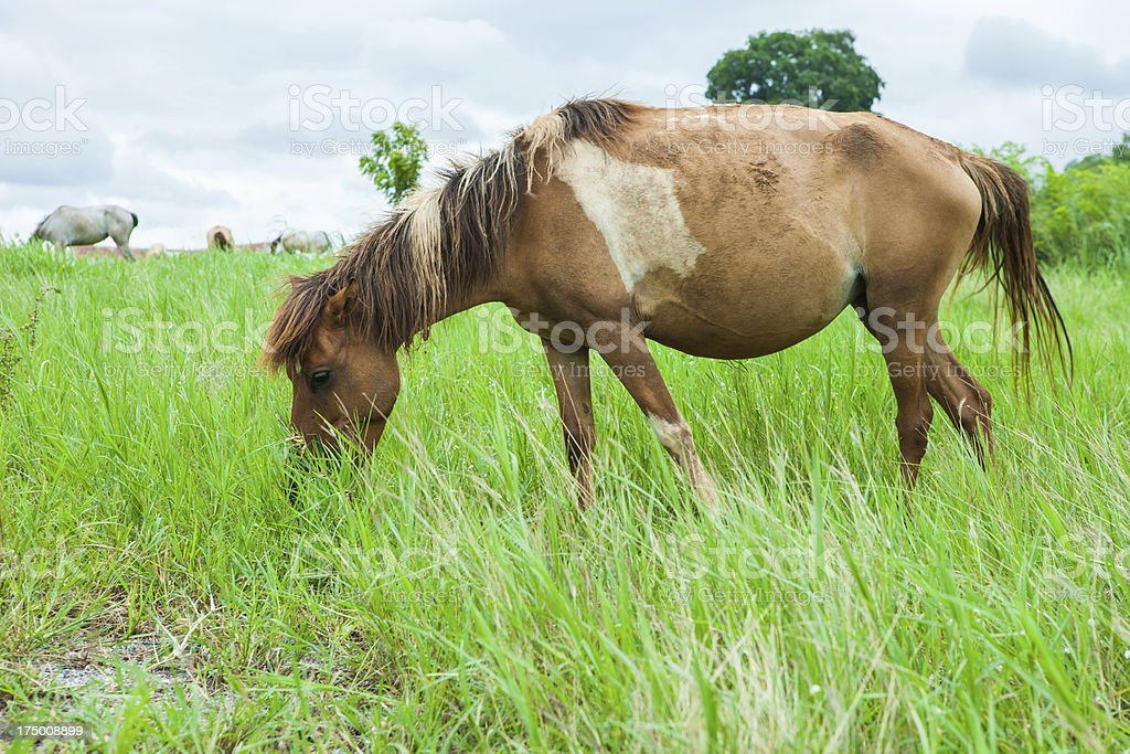 Standing horses eat grass royalty-free stock photo