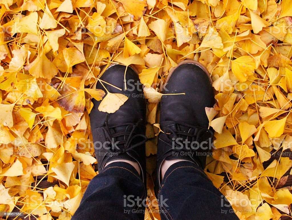 Standing in autumn ginkgo leaves stock photo