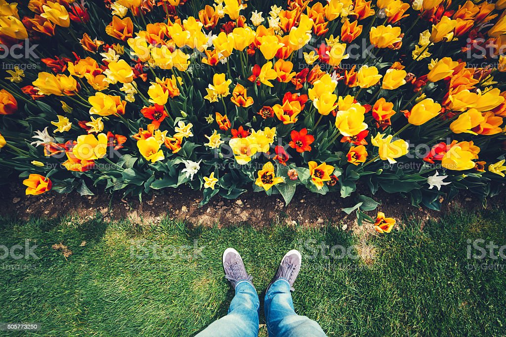 Standing In Front Of Tulip Field stock photo