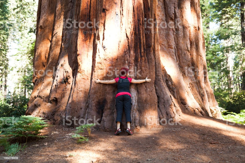 Standing next to a giant tree in Sequoia National Park stock photo