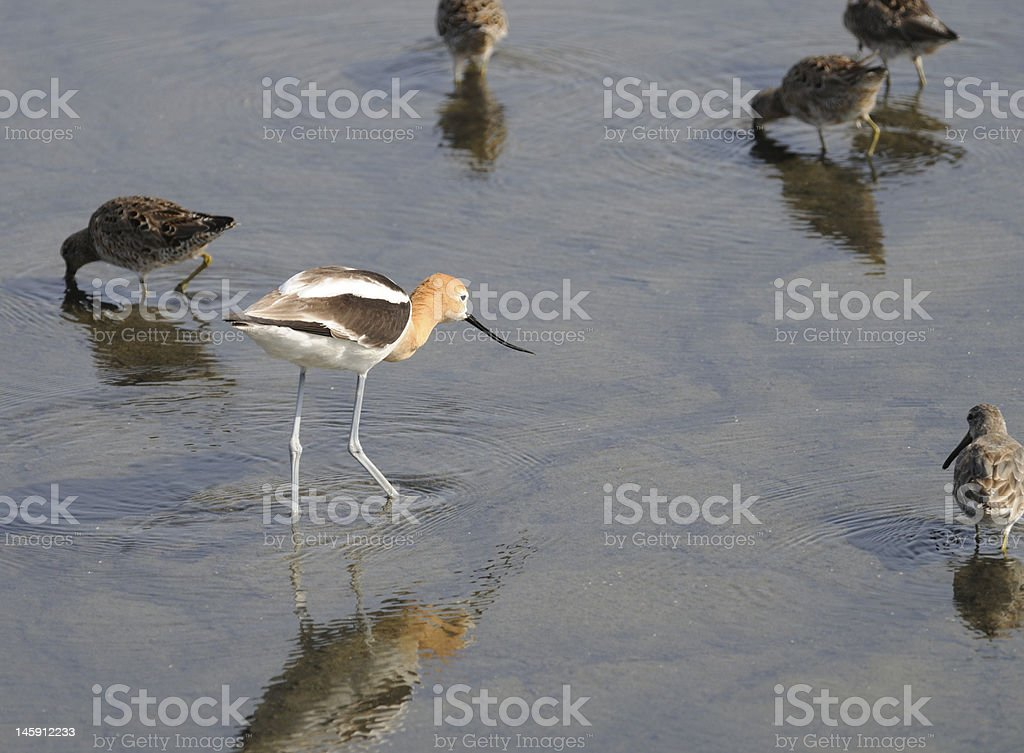 Standing out in a Crowd royalty-free stock photo