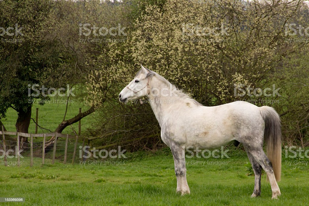 Standing Proud royalty-free stock photo