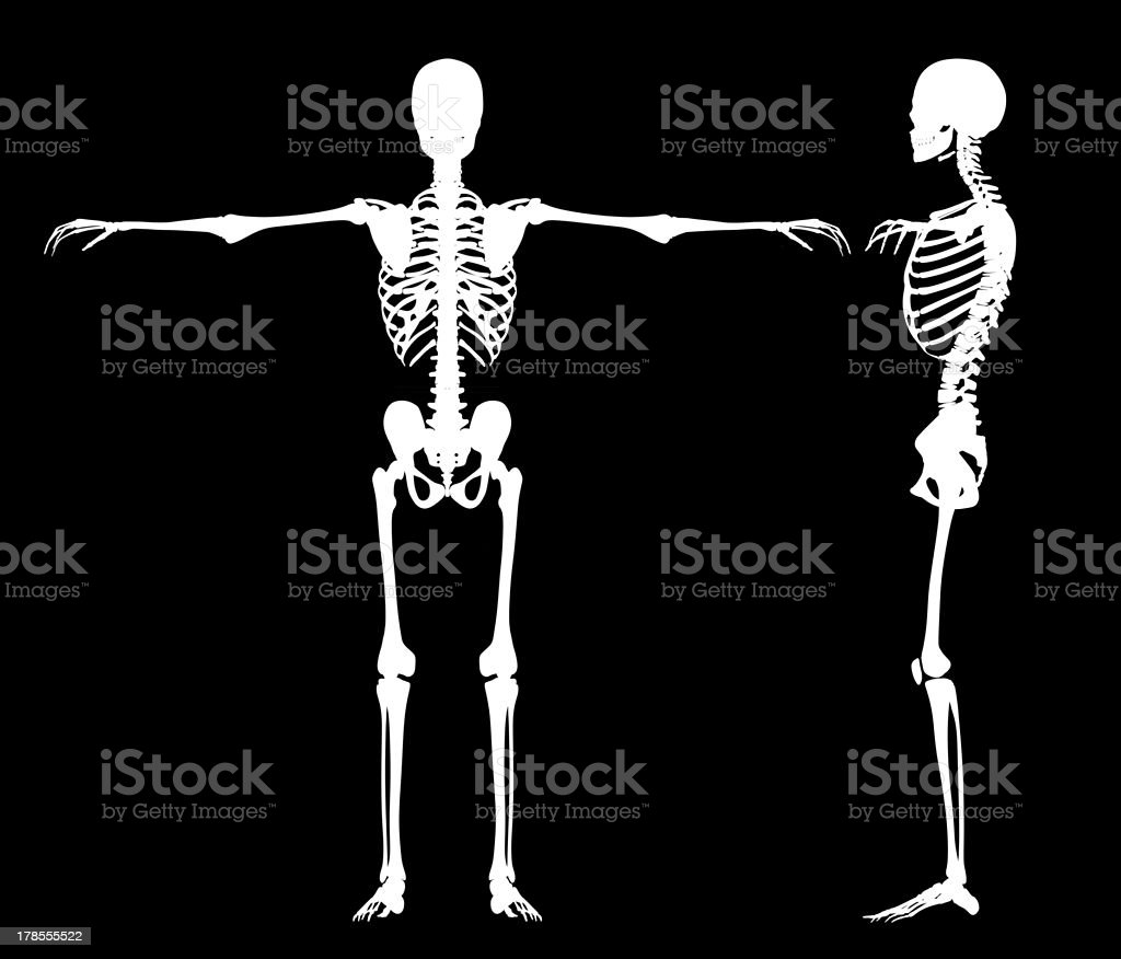 Standing skeletons royalty-free stock photo