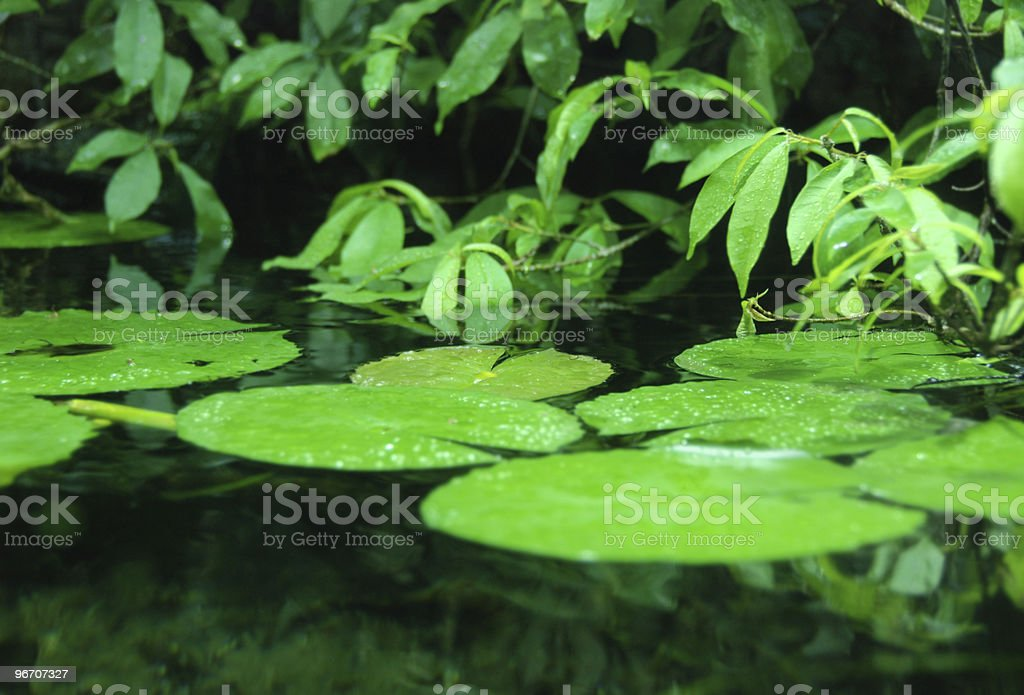standing water and plant background royalty-free stock photo